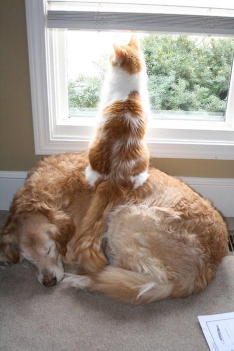 Cats cute sleeping teamwork - 8031667456