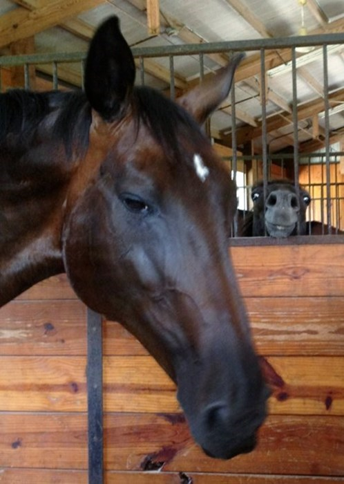 photobomb majestic horses funny - 8031705856