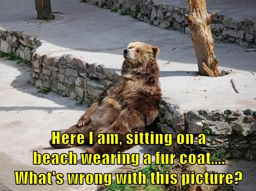 bears,fur coat,beach,funny