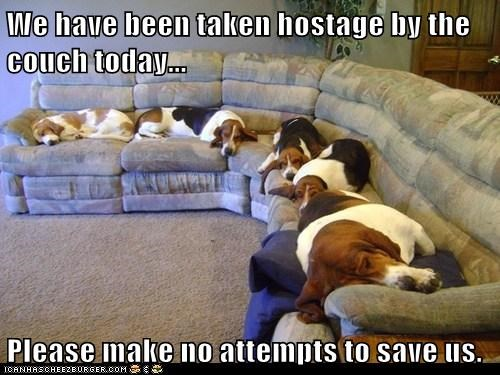 dogs hostage excuses cute sleeping - 8032729344