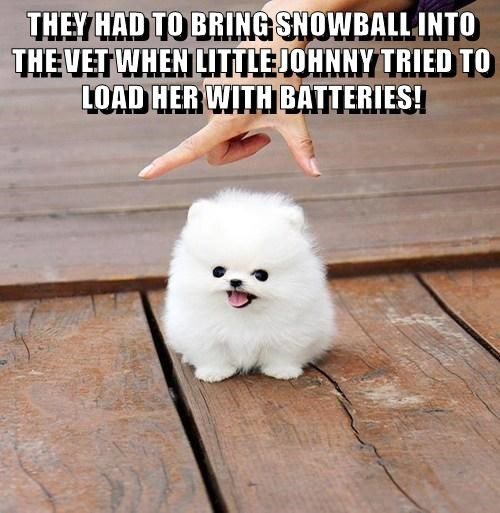 THEY HAD TO BRING SNOWBALL INTO THE VET WHEN LITTLE JOHNNY TRIED TO LOAD HER WITH BATTERIES!