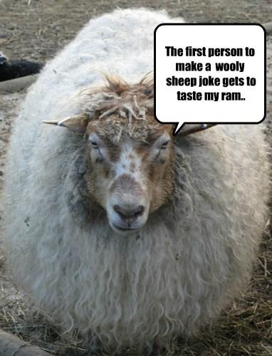 angry puns sheep - 8032906496