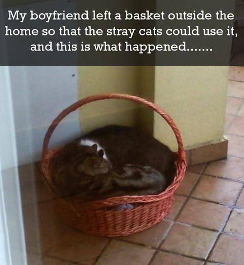 cute Cats rescue - 8033117440