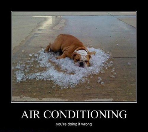 dogs,ice,air conditioning,funny