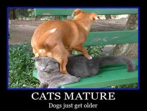 dogs jerks Cats funny animals - 8033467904