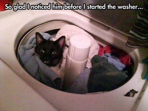 Cats cute whoops washer hide