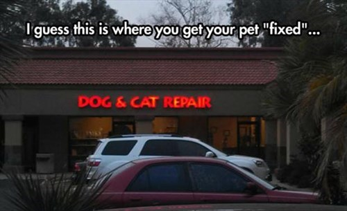 Cats does fixed funny neuter