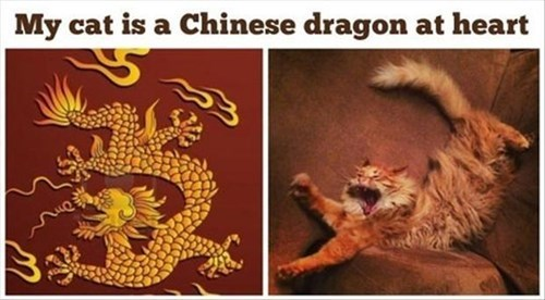 Cats legends Chinese dragon - 8034449920
