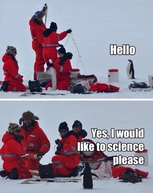 cute,cold,ice,snow,science,penguins