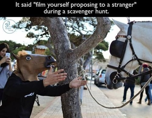 funny,proposal,horses,win,scavenger hunt