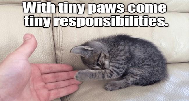 funny cat memes lolcats funny memes cute Memes cute cats funny cats Cats cat memes jo38ma3 - 8034565
