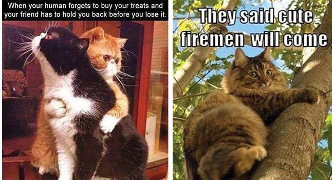 funny cat memes its-caturday lol funny cats Caturday Cats cat memes - 8035077