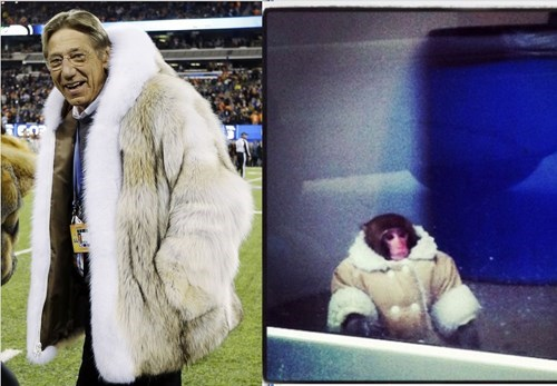 joe namath ikea monkey nfl super bowl - 8035362048