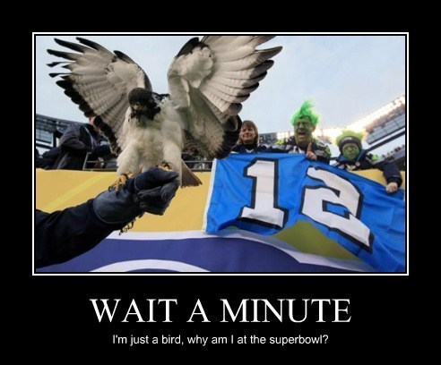 super bowl,seahawk,bird,football,funny,animals