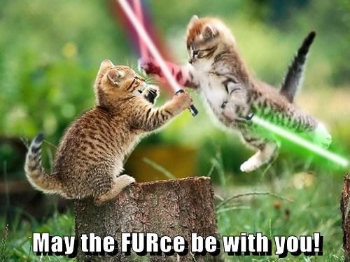 star wars cute light sabers Cats