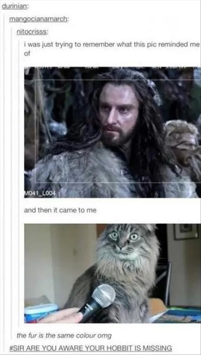 dwarves compare The Hobbit Cats