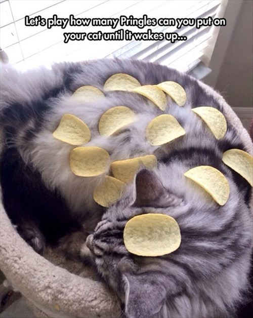 chips,pringles,pranks,Cats,sleeping