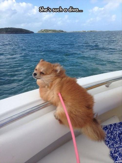 dogs,cute,Divas,boats