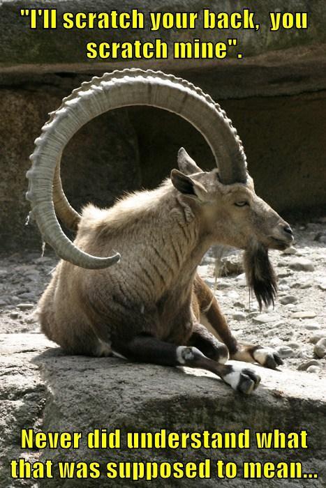 scratch goats funny - 8036051456