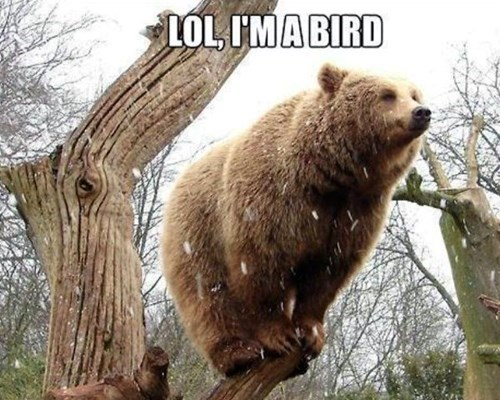 imitate,birds,bears,funny