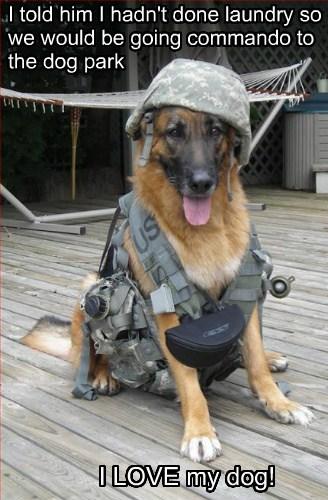 dogs jokes commando - 8036061696