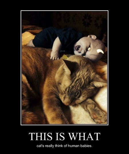 Babies devil Cats demons funny animals - 8036077056