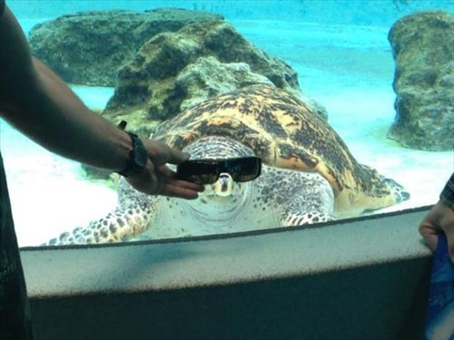 sunglasses poorly dressed turtles aquarium - 8036129536