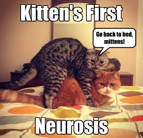 Kitten's First Neurosis Go back to bed, mittens!