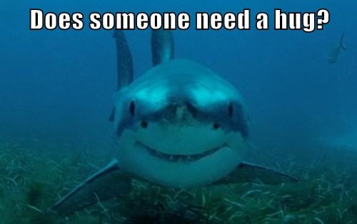 teeth sharks hugs love bite funny - 8036307200
