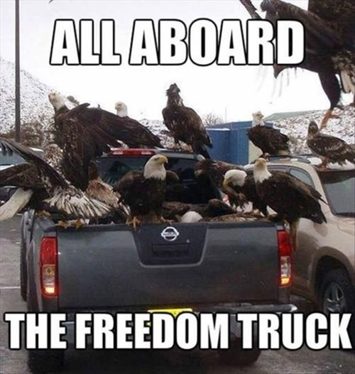 eagles,freedom truck,trucks
