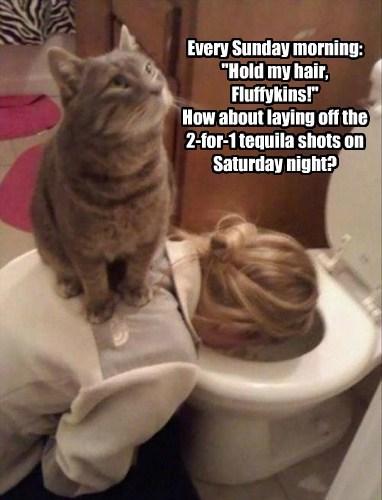 puke drinking Cats funny - 8037565440