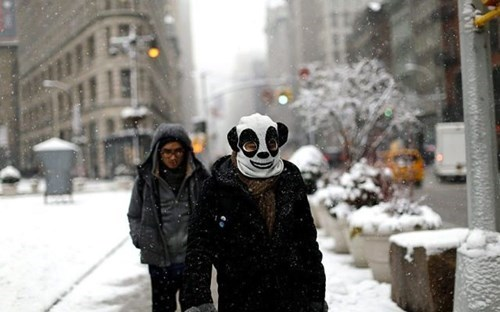 panda,poorly dressed,snow,hat