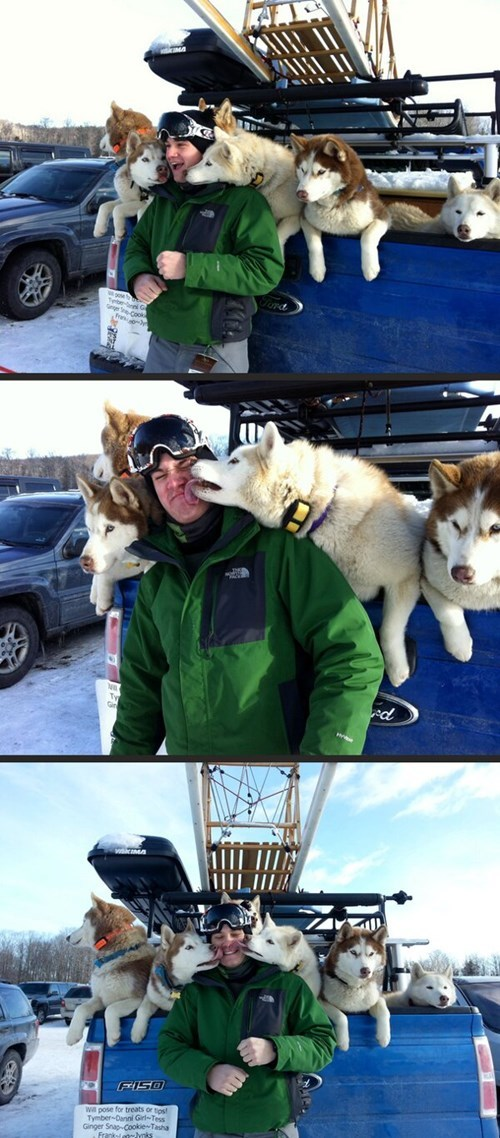 dogs snow pack cute kissing huskies