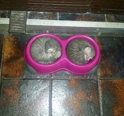 so cute kitten food Cats sleeping - 8038151168