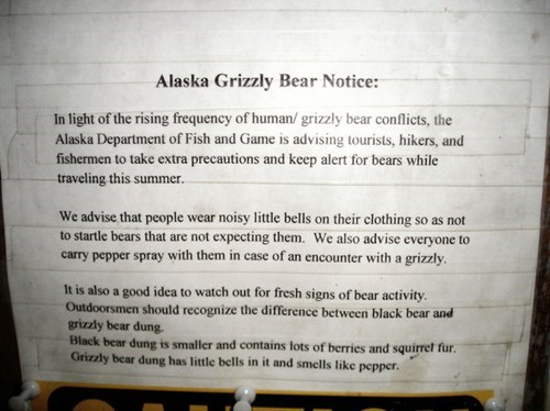 alaska bears grizzly bears - 8038165248