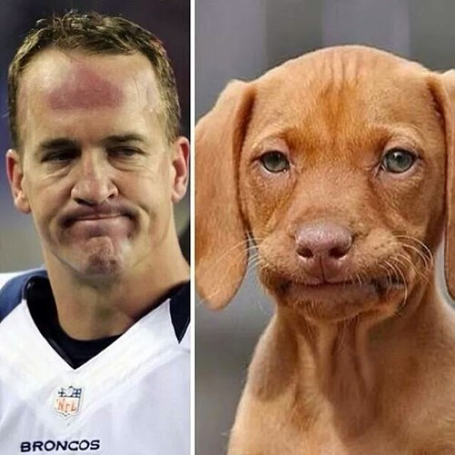 disappointed,dogs,puppies,super bowl XLVIII
