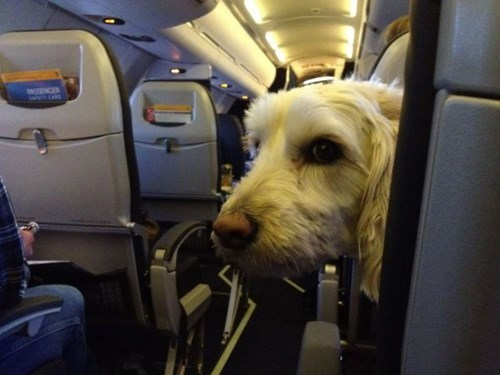 dogs,funny,airplane,flying