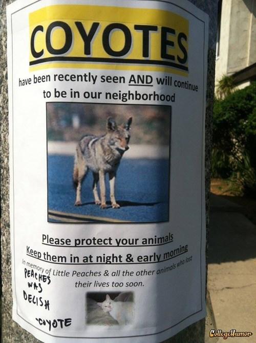 coyotes graffiti - 8038383872