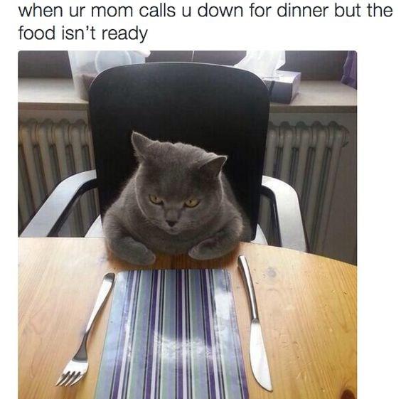 funny memes Memes dinner Cats cat memes - 8038405