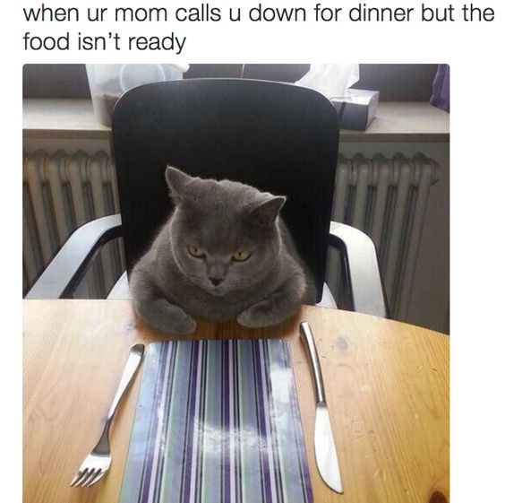cats eating food at dinner