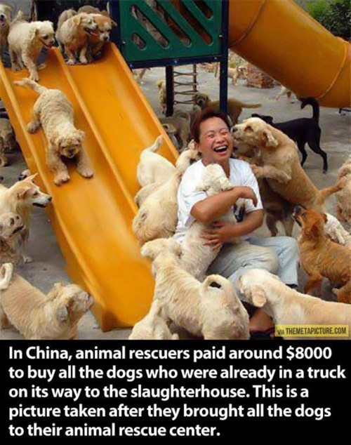 dogs China love rescued