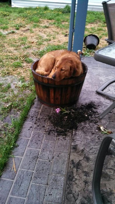 so cute dogs be careful digging - 8038434048