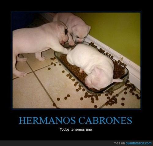 perros Memes animales fotos - 8038535680
