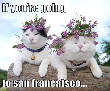 if you're going   to san francatsco...