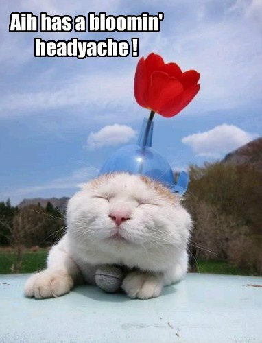 headache flowers Cats funny - 8039893504