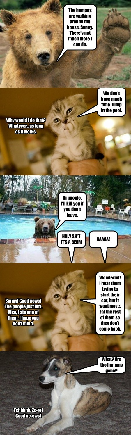 dogs,bears,mastermind,Cats,funny