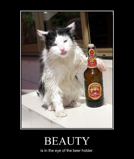 beer Cats beauty funny - 8040370176