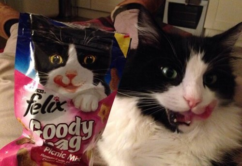 treats,look alike,cute,noms,Cats