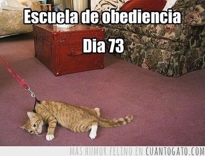 gatos Memes animales - 8040408064