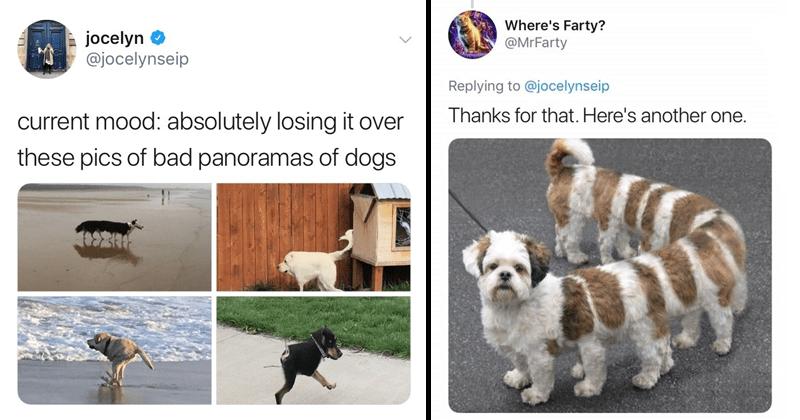Funny panorama pics of cats and dogs.